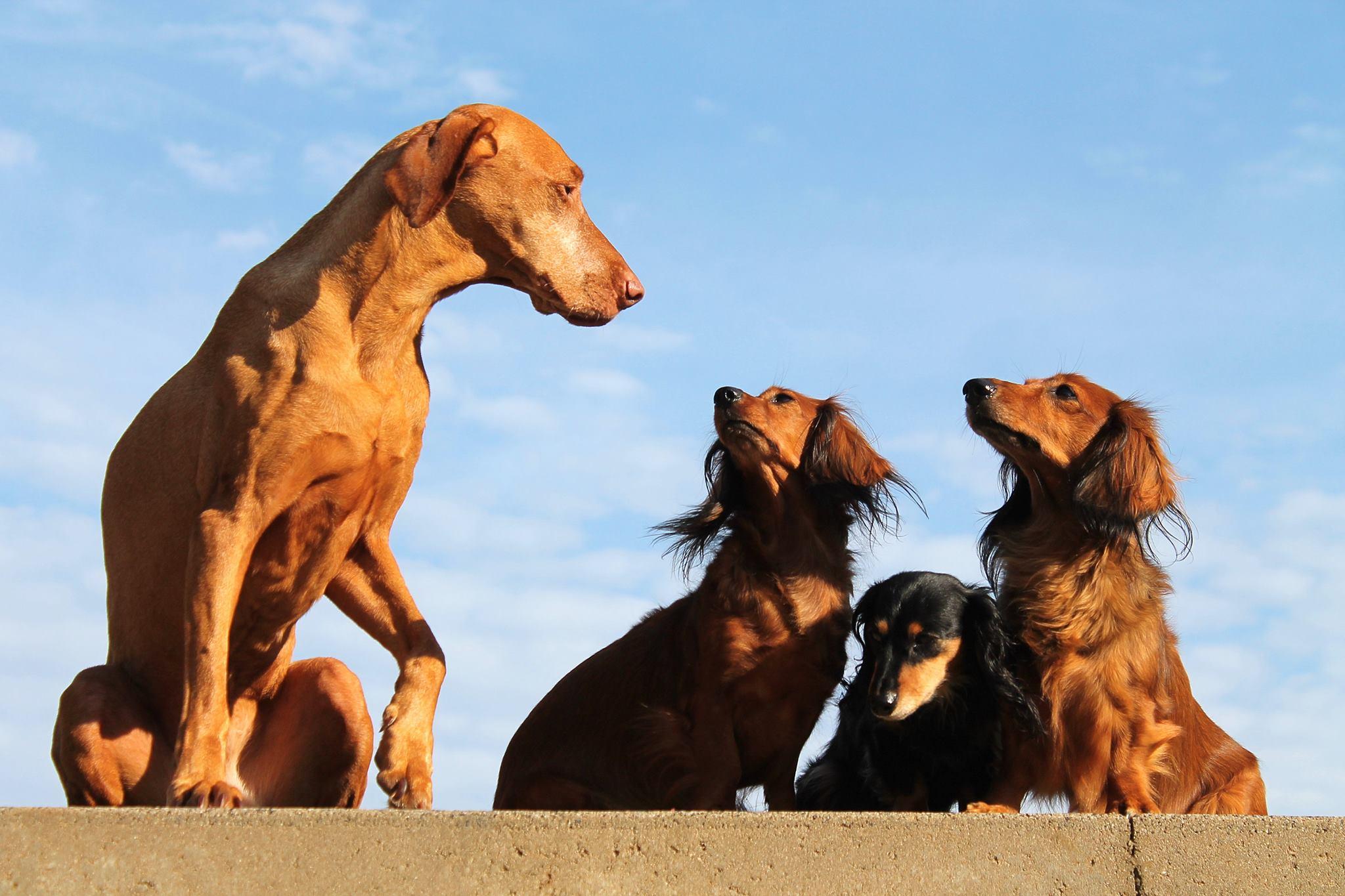 Genehmigungsverfahren Hundetrainer