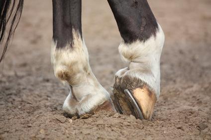 Pferderechtsanwalt