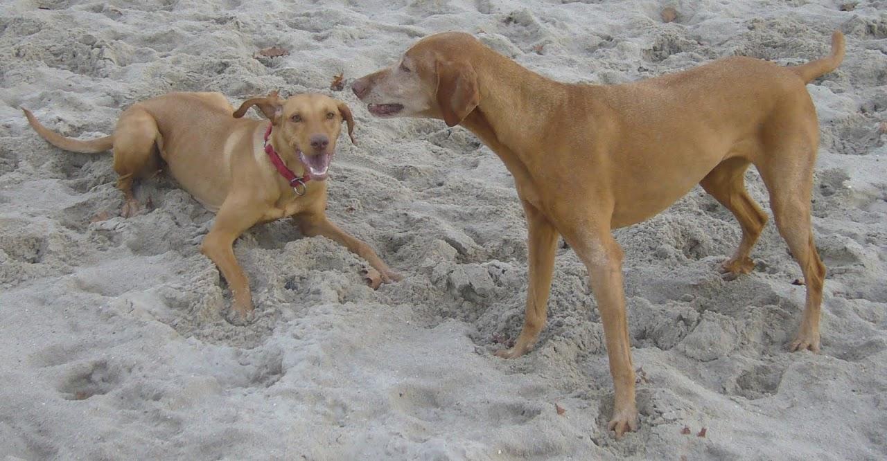 Kanzlei für Hunderecht
