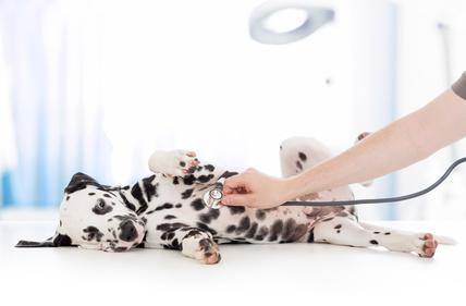 Tierarzthaftung Beaucamp