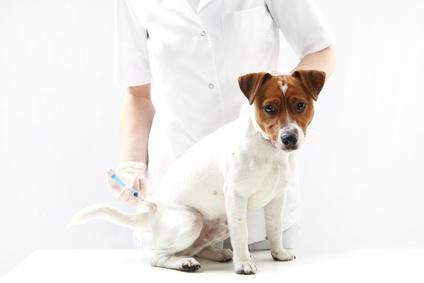 Tierrecht Anwalt
