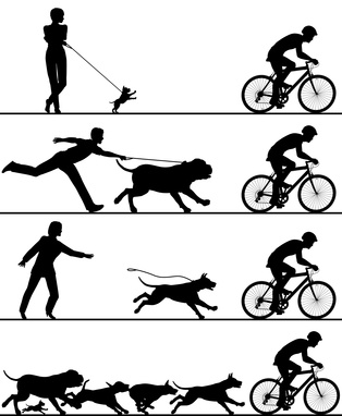 Tierrechtskanzlei
