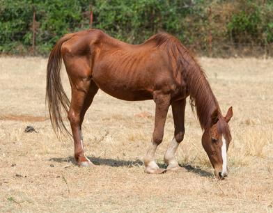 Schlechte Pferdehaltung