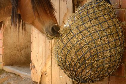 Pferderecht