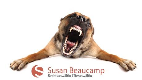 Anwalt für Hunderecht