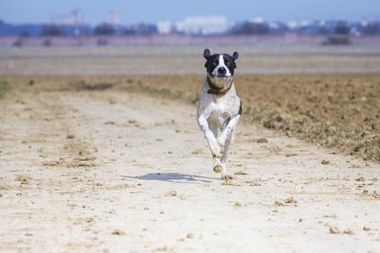 Anwalt für Hunderecht Düsseldorf