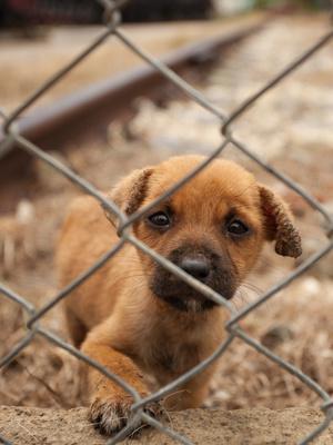 Tierschutzverträge 2016