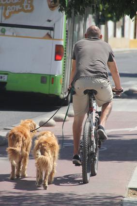 Hundehalterhaftung § 833 BGB