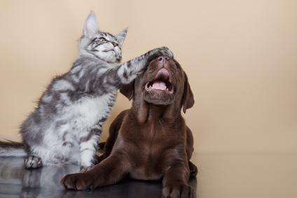 Hnd verletzt Katze