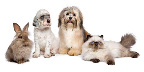 Erlaubnispflichtigkeit von Pflegestellen § 11 TierSchG ?