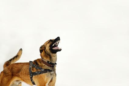 Anwalt für Tierrecht Düsseldorf