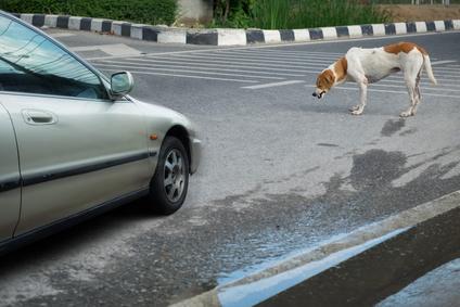 Anwalt für Tierrecht